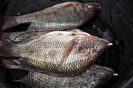 close up group of fish prepared