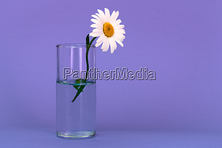 a glass with a beautiful bright