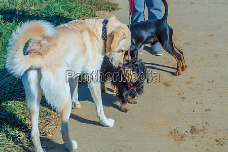 group behaviour of dogs