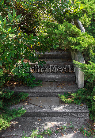 stairs and surrounding vegetation