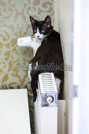cat on the heater