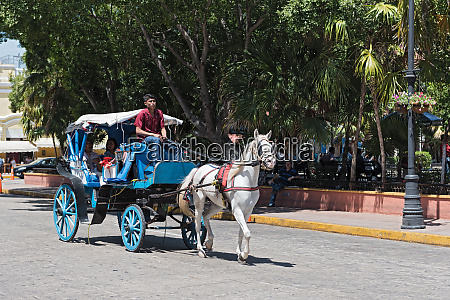 blue horse drawn carriages on a
