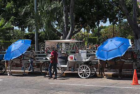 horse drawn carriages on a city