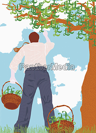 man picking pound signs from tree