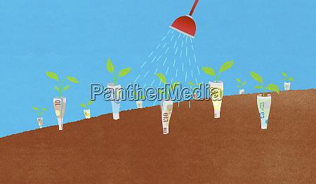 watering of money plants