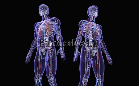 transparent man and woman