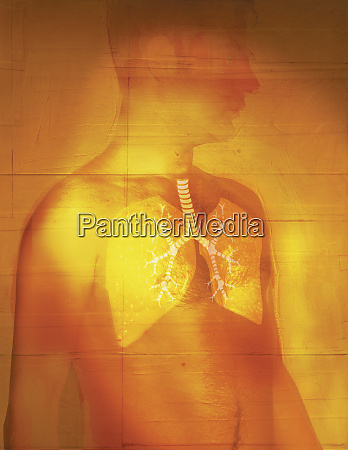 man with transparent skin displaying lungs