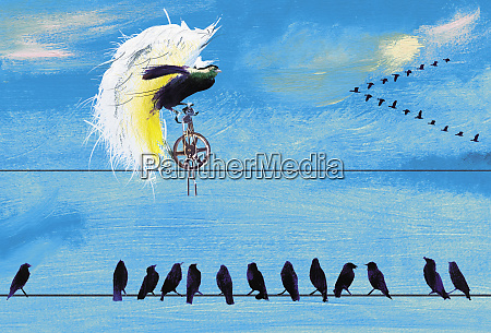 birds on telephone wire watching exotic