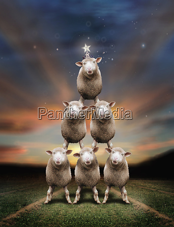 sheep in christmas tree formation