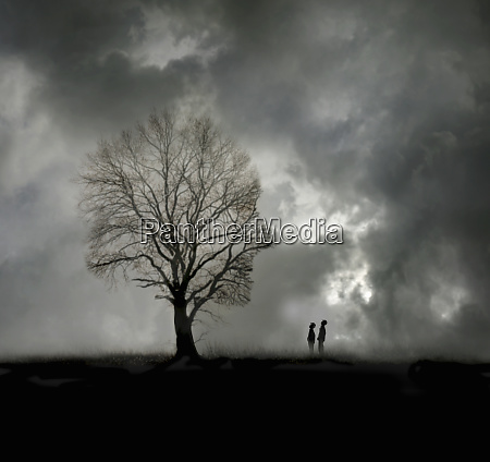 two boys looking up at tree