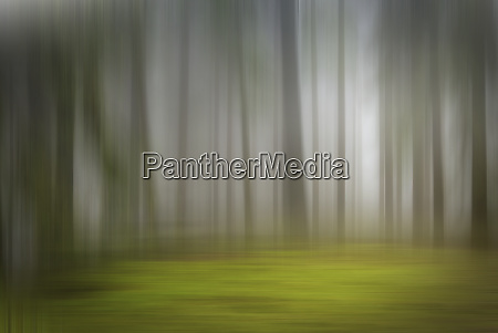 abstract blurred motion forest