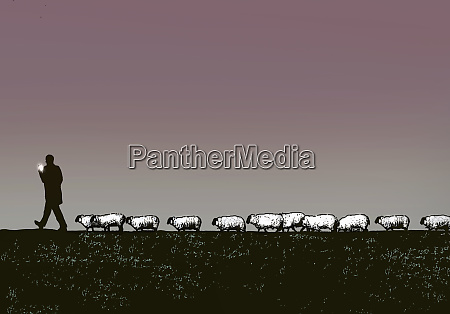 sheep following man using smart phone
