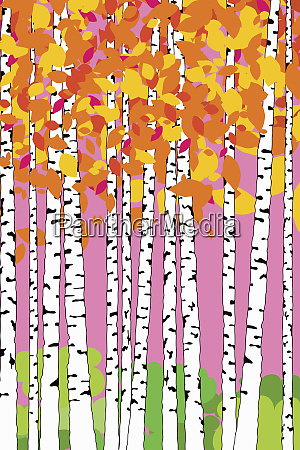 abstract pattern of birch trees with