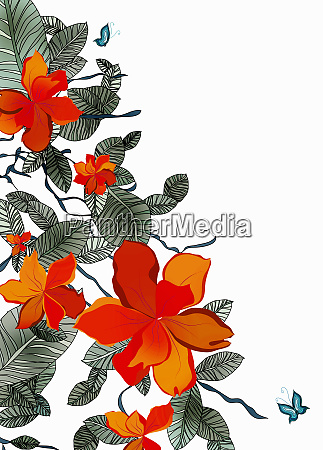 orange flowers and butterfly on white