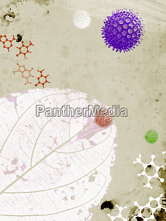 allergens molecules and leaf