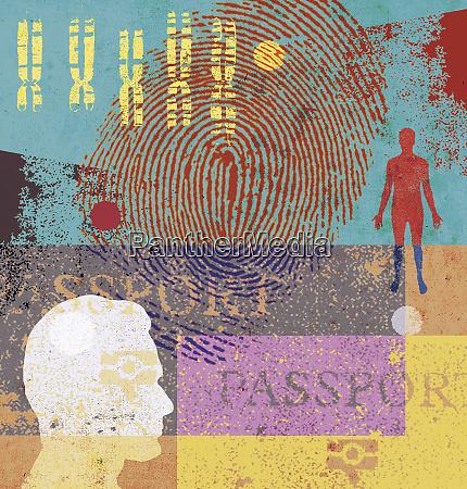 man chromosomes fingerprint and passport