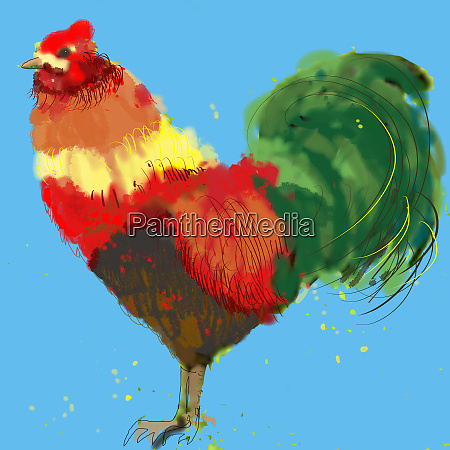 close up of colorful rooster
