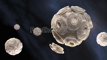 illustration of emiliania huxleyi phytoplankton