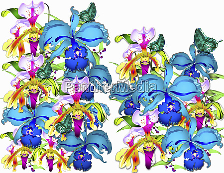bright colorful orchid flowers