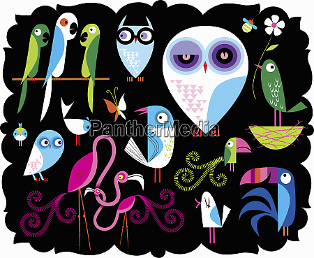 variety of cute multicolored birds