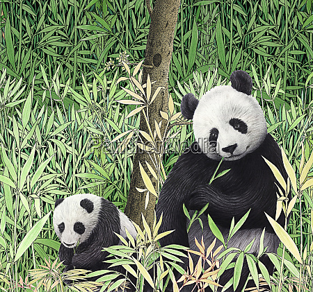 adult and baby pandas eating bamboo
