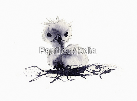cute fluffy chick in nest