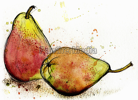 close up of two williams pears