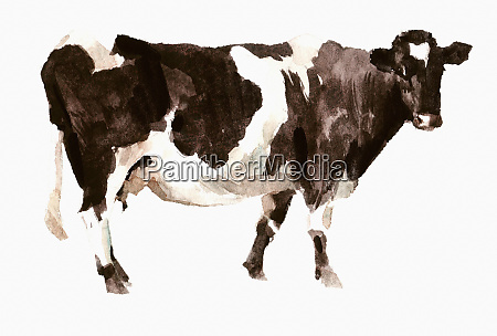 watercolor painting of shetland cow