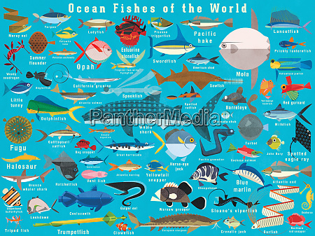 illustration of lots of ocean fish