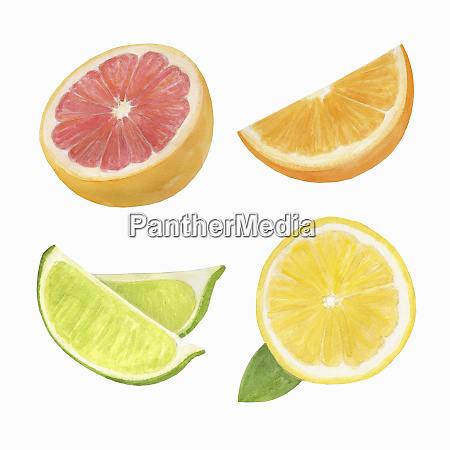 watercolour painting of slices of citrus