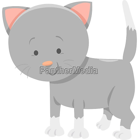 funny gray kitten cartoon animal character