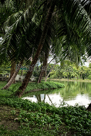 landscape of lakeside view with palm