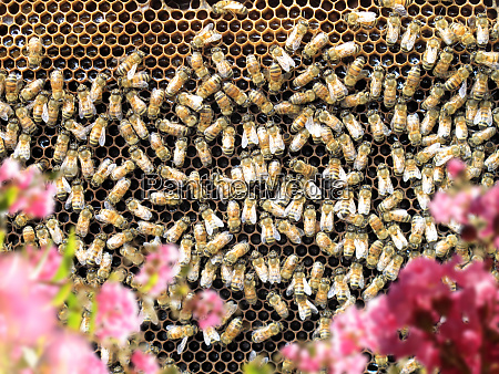close up group of honeybees on