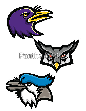 american birds sports mascot collection