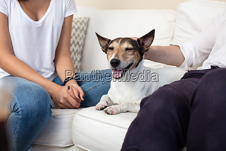 contented dog with a happy smile
