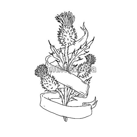 scottish thistle with ribbon drawing black