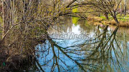 tree branches reflexion