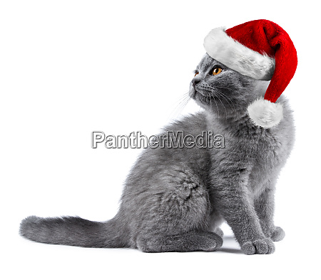 kitten with red white christmas santa