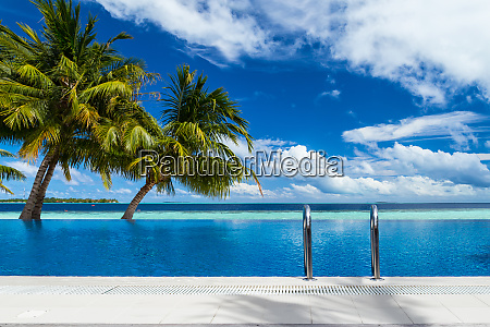 infinity pool with coco palms