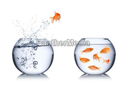 fish return concept