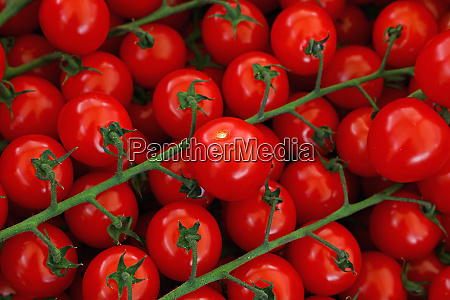 close up fresh red cherry tomatoes
