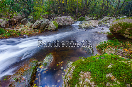 beautiful creek in the forest in