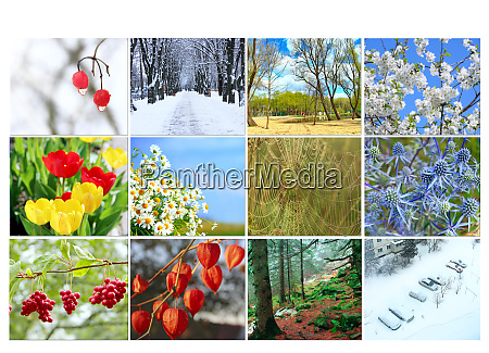twelve colored images of nature for