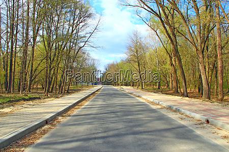 road in city park between trees