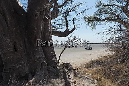 baines baobab from nxai pan national