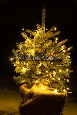 lit christmas tree as an outdoor