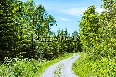 path in forest daytime footpath hiking