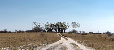 sand road with the baines baobabs
