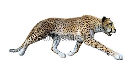 3d rendering big cat cheetah on