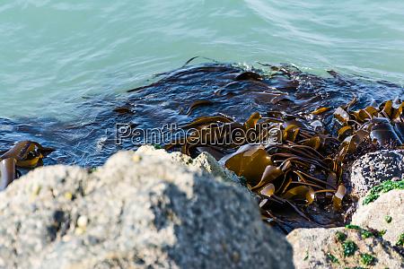 seaweed close up texture shot rocks